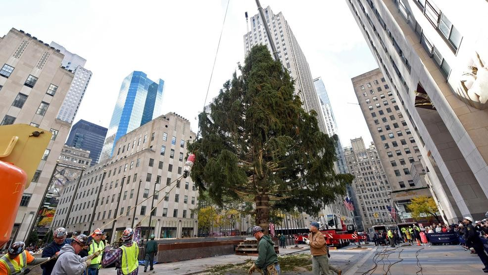 IMAGE DISTRIBUTED FOR TISHMAN SPEYER - Workers raise the 2018 Rockefeller Center Christmas tree, a 72-foot tall, 12-ton Norway Spruce from Wallkill, N.Y., ...