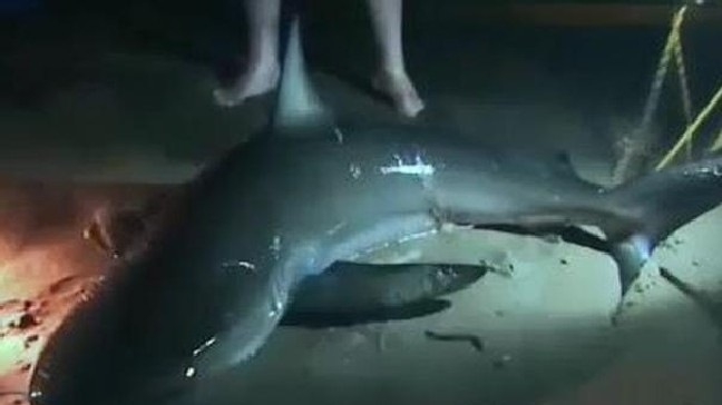 Families catch two sharks in one night in Ocean City