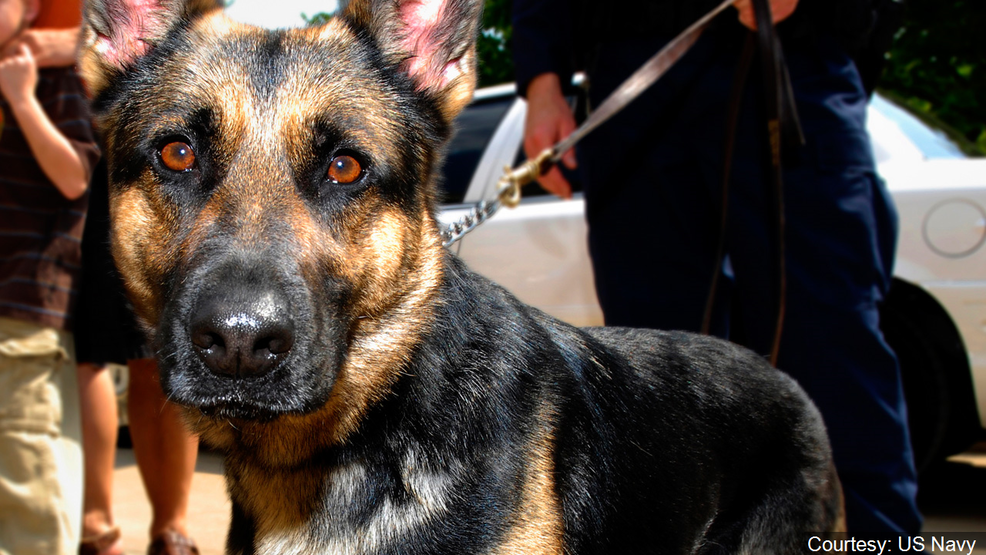 Police searching for German Shepherd believed to be