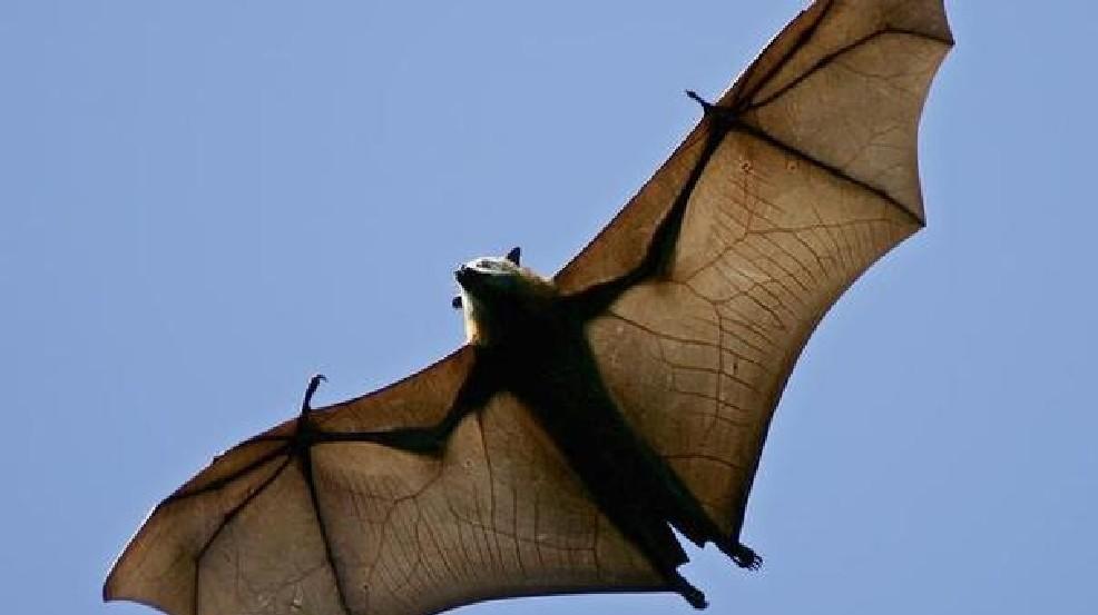Rabid Bat Found In Glen Burnie Apartment Complex